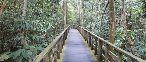 Mulu Boardwalk Encounter Travel