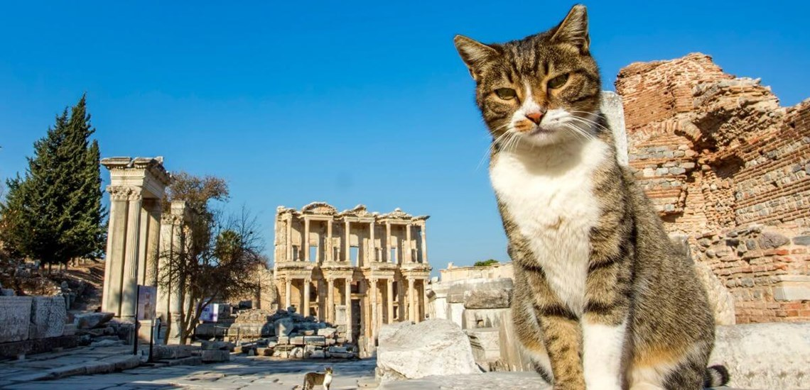 Cat lovers visit Ephesus
