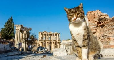 Cat lovers that love travel