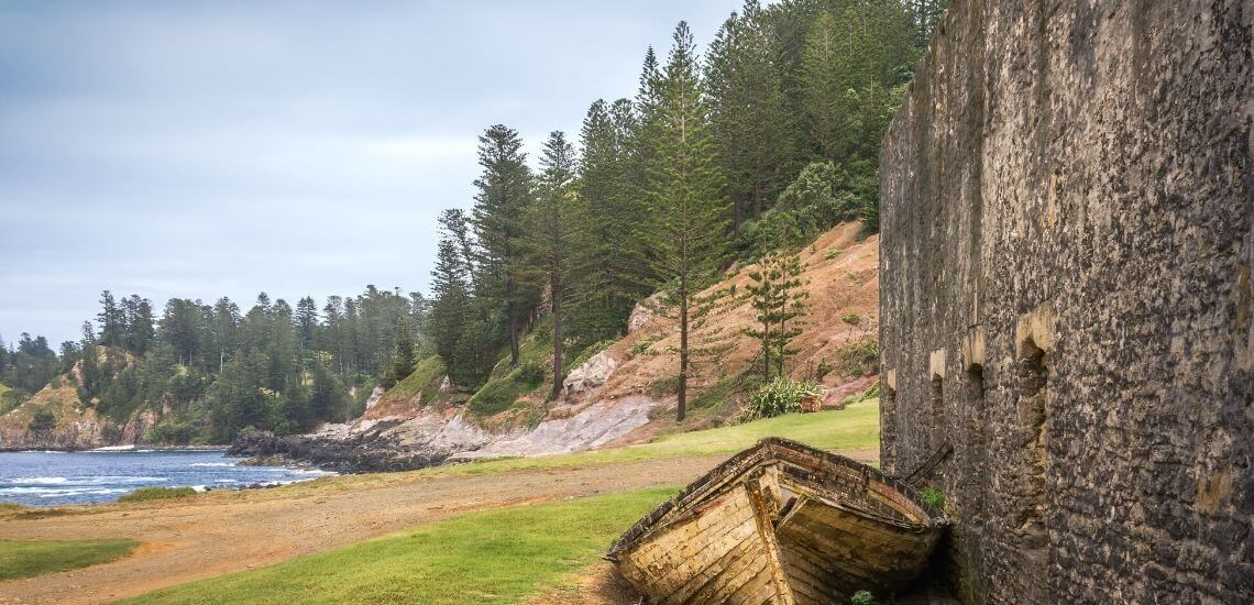 Pines of Norfolk Island